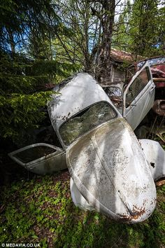 Photographer Svein Nordrum captures Sweden's classic car graveyard rusting in forest | Mail Online