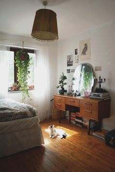 Cat! Wide floorboards, books stacked on the floor, plants + funny-looking armoire.
