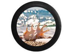 Full Color Seashell Sealife on Sandy Beach Sky by TheCoverGuy