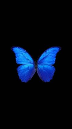 Blue Butterfly Discover Butterfly Ringtones and Wallpapers - Free by ZEDGE Butterfly Wallpaper Iphone, Black Phone Wallpaper, Disney Phone Wallpaper, Iphone Background Wallpaper, Dark Wallpaper, Aesthetic Iphone Wallpaper, Aesthetic Wallpapers, Black And Blue Wallpaper, Beautiful Wallpaper