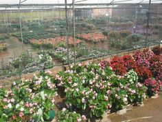 Colourful Hanging Baskets, Nurseries, Plants, Color, Fall Hanging Baskets, Babies Rooms, Child Room, Colour, Plant