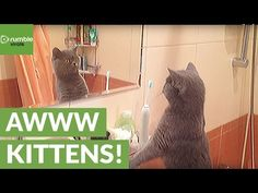 Cat cannot believe how good-looking his own reflection is http://amapnow.com http://my.gear.host.com http://needava.com http://renekamstra.com