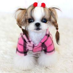 hermosa perrita bien peinada
