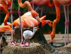 Flamingo Park xx !