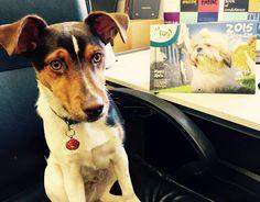 Meet Jack! Corgi, Adoption, Meet, Animals, Foster Care Adoption, Animaux, Corgis, Animal, Animales