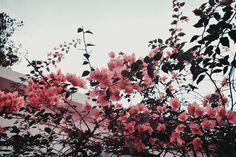 A fresh morning! <3    #aesthetic #pink #flowers #indie #wallpaper #vintage #retro #tumblr #weheartit #wanderlust #travel