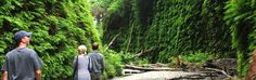 Things to do on California's redwood coast (a website with some ideas on a bunch of cool stuff we could do)