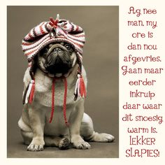 Ag nee man, my ore is dan nou afgevries. Gaan maar eerder inkruip daar waar dit snoesig warm is. Good Night, Good Morning, Evening Greetings, Goeie Nag, Angel Prayers, Afrikaans, Cute Quotes, Positive Thoughts, French Bulldog