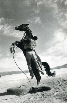 Resultado de imagen para doma caballo wallpapers