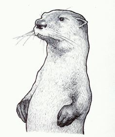 Andy P's Sketch Book ((Updated Oct The Richmond Zombie Walk Cartoon Sketches, Animal Sketches, Animal Drawings, Otter Tattoo, Dancer Tattoo, Otter Love, Scratchboard Art, Different Forms Of Art, Oil Pastel Paintings