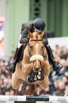 This sport is so elegant. It's the most beautiful sport ever I'm so in love with… – Art Of Equitation Cute Horses, Horse Love, Beautiful Horses, Show Jumping Horses, Show Horses, Horse Photos, Horse Pictures, Equestrian Outfits, Equestrian Style