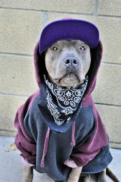 From passionforpits.tumbler.com.