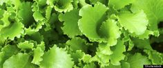 SALINAS, Calif. -- A California lettuce grower has expanded a recall of some bagged salads after routine sampling detected listeria contamination. No illnesses have been reported.