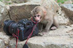 Canon EOS 5D Mark3 and Newborn baby 2014