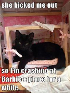 Barbie,captions,cute,Cats