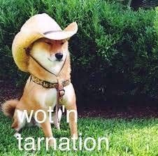 Image Result For Meme Shiba Inu Dog Template Dog Exercise Memes