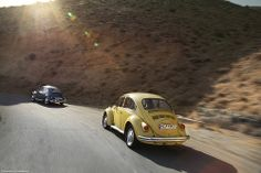 Desert Beetles