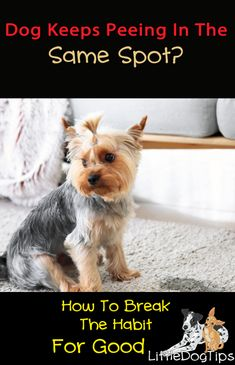 When your dog keeps peeing in the same spot in your home, you'll need to get rid of the visual, scent-based, and memory based cues that keep them coming back: Dog Pee, Puppies Tips, Group Of Dogs, Pet Gate, Dog Games, Dog Training Tips, New Puppy, Little Dogs, Shepherd Dog