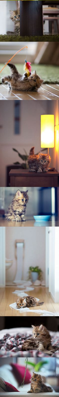 Funny pictures of the day (76 pics) I want this kitten :( he is so adorable