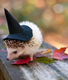 thats the smallest witch ive ever seen
