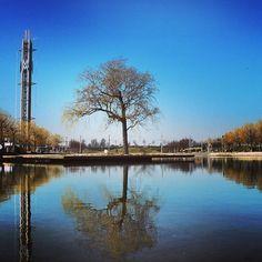 Baum - Spiegelbild