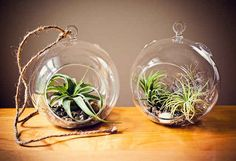 Air plant terrariums will liven up a dorm, too. | 37 Ingenious Ways To Make Your Dorm Room Feel Like Home