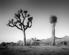 Black And White Landscape, Black White, Panorama Camera, Landscape Photography, Art Photography, Indian Artist, Contemporary Landscape, All Pictures, Black And White Photography
