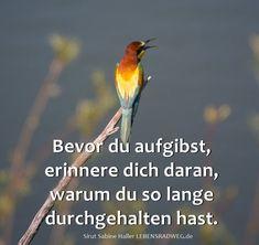 Erinnere Dich! Was sagt Dein liebendes Herz...? Spirit, Wisdom, Love, Motivation, Sayings, Quotes, Patience Love, Sad, Mummy Quotes