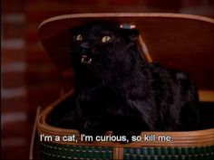 If we had to pick a favorite feline familiar, it would hands down be Salem the Cat from Sabrina the Teenage Witch. Salem Sabrina, Sabrina Cat, Cat Memes, Funny Memes, Hilarious, Funny Quotes, Salem Cat, Salem Saberhagen, My Spirit Animal