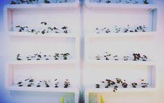 hydroponics system DIY