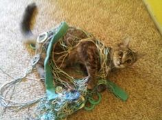 http://thechive.com/2014/12/18/these-animals-are-shocked-youre-home-so-early-30-photos/guilty-animals-caught-18/