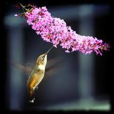 hummingbird on a flower <3 it