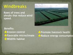 Wind breaks help prevent erosion and provide habitat. Slide Courtesy of the USDA National Agroforestry Center.