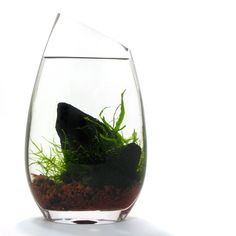 The BLUEiQ miniature ecosystem, $79