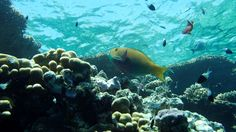 Sharm El Sheikh, Olympus, Action, Pisces, World, Pictures, Group Action