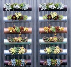 Fabulous vertical hanging garden with succulents made from pvc pipe, painted with metallic colors. Could make a great DIY project for an indoor garden.