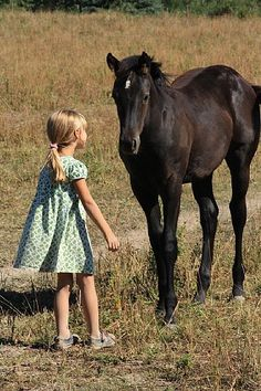 black colt on a summer day