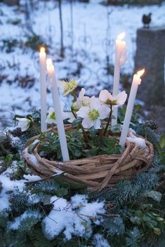 Joyeux Noel Make a Brighid's Crown for Imbolc Imbolc Ritual, Samhain, Altar, Happy Winter Solstice, Spring Sign, Festival Lights, Book Of Shadows, Making Ideas, Craft Projects