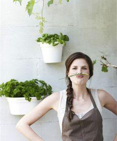 Elho-Wall-Basket-Pot-21cm-hanging-basket-plastic-pots-black-green-or-white