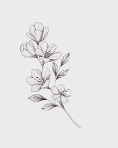 Little Tattoos, Mini Tattoos, Body Art Tattoos, Small Tattoos, Floral Tattoo Design, Flower Tattoo Designs, Flower Tattoos, Flower Tattoo Drawings, Jasmin Tattoo