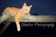 Relaxing - Shutter Photography Shutter Photography, Shutters, Relax, Cats, Animals, Blinds, Shades, Gatos, Animales
