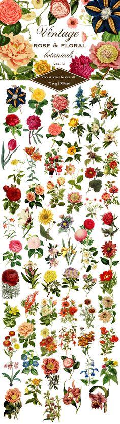 Vintage Rose & Floral Botanicals 2  by Eclectic Anthology on @creativemarket
