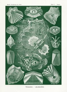 Items similar to Art Forms of Nature - Teleostei (Ray-Finned Fishes) - Ernst Haeckel Artwork (Art Prints, Giclees, Wood & Metal Signs, Tote Bag, Towel) on Etsy Ernst Haeckel Art, Science Drawing, Natural Form Art, Fish Print, Antique Prints, Oeuvre D'art, Art Reproductions, Art Forms, Fine Art Paper