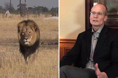 Cecil the Lion and American dentist Walter Palmer who cut off Cecil's  head and took his skin.
