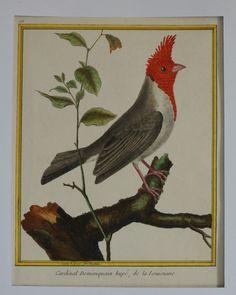 Gravure du XVIII ou XIXème siécle en couleur ou réhaussée postérieurement dimensions de la feuille 31 X 22 cm environ. Cardinal Dominiquain hupé, de la Louisiane. Yann Le Mouel - 17/09/2015 #Oiseau #Bird