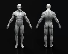 ArtStation - Anatomy Figure, Marc Brunet