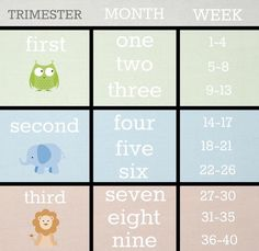Weeks and Months and Trimesters… Oh My! | NoviceMommy #pregnancy #prenatal #trimesters