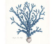 Coastal Decor Art Print Vintage Pacific Sea Kelp No. 3 8x10 Coastal Blue on Etsy, $15.00