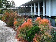 firestick Front Yard Landscaping, Sidewalk, Florida, Landscape, Plants, Projects, Pictures, Log Projects, Photos