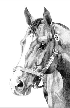 Pencil Drawing Patterns Gallery - S. Horse Face Drawing, Horse Drawings, Animal Drawings, Art Drawings, Drawing Art, Drawing Ideas, Horse Artwork, Horse Paintings, Pastel Paintings